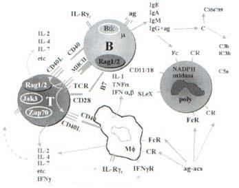 Diagrama simplificado de los componentes de los genes