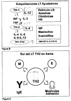 Origen celular de las Citocinas inflamatorias en asma