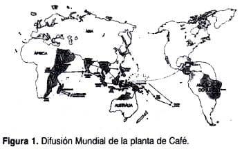 Difusion planta cafe