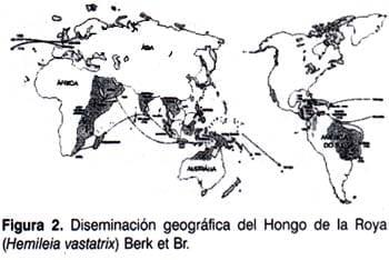 Diseminación geográfica del hongo de la Roya