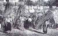 Indios recolectores de leña