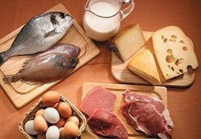 animal protein (types of food)