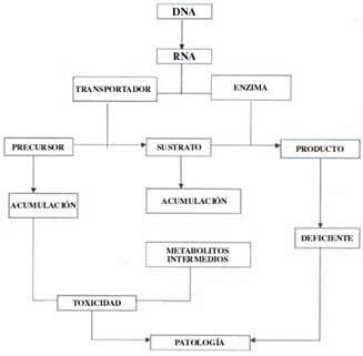 Fisiopatología de un error innato del metabolismo