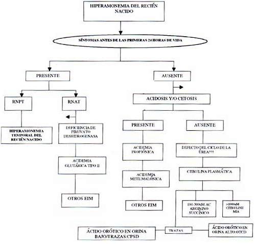 Hiperamonemia del recien nacido