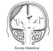 Teoría osmótica
