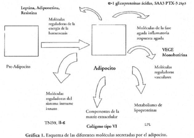 polimorfismo del gen de la adiponectina en la diabetes