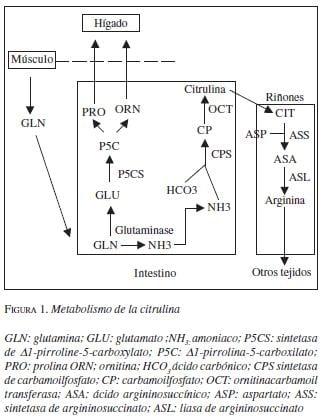 Metabolismo de la Citrulina