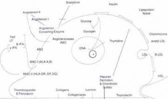 Otras funciones del endotelio, Papel Endotelio en el Climaterio