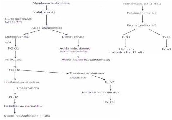 Metabolismo del ácido araquidónico y eicosapentaenoicos en la célula endotelial