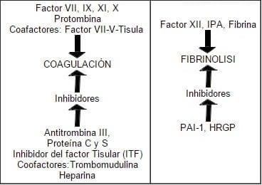 Relación entre los 4 sistemas, tono vascular, plaquetas, coagulación y fibrinólisis.