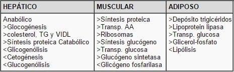 Efectos de la insulina en los órganos blanco.