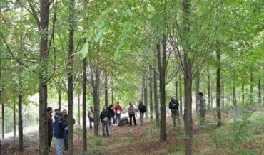 Ley Forestal Bosques Naturales
