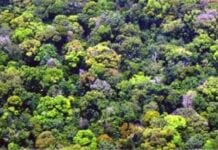 Ley Forestal Disposiciones Generales