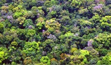 Ley Forestal Disposiciones Generales