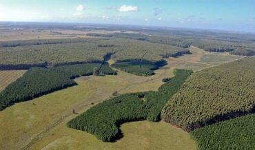 Ley Forestal Financiación y Estímulos
