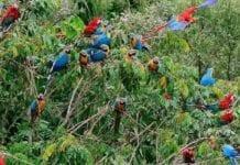Ley Forestal Régimen Nacional