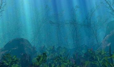 Mar y de su Fondo