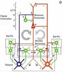 Diagrama de sistemas talamo corticales