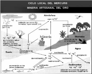 Ciclo local del mercurio