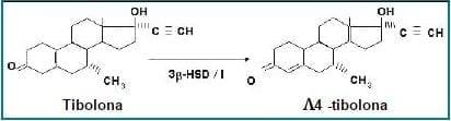 Conversión específica de la tibolona en el endometrio (34).