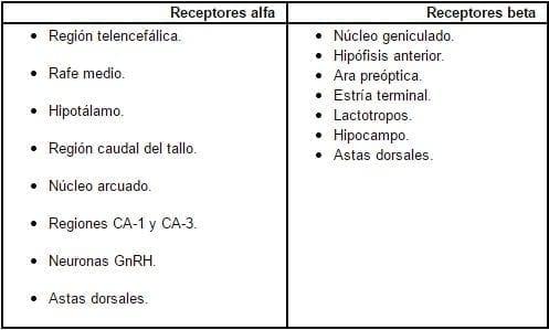 Localización de los receptores estrogénicos en el sistema nervioso central Barón G.40.