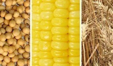 Productos de maíz - soya