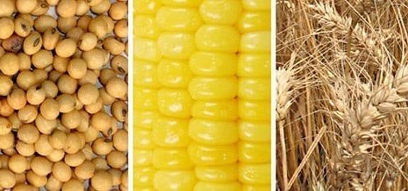 disfunción sexual del maíz
