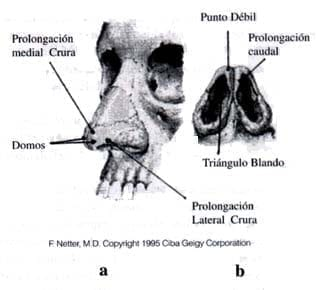 Anatomía Quirúrgica