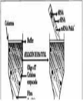 Separación de cromatografía