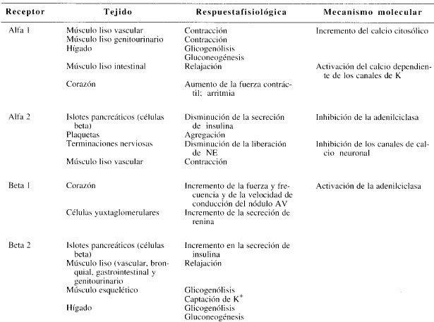 Subtipos de los receptores adrenérgicos