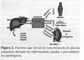 Factores que elevan la concentración de Glucosa Sanguínea
