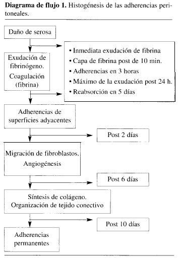 Histogénesis de las Adherencias Peritoneales