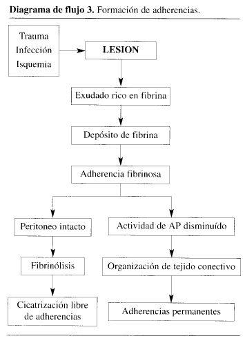 Formación de Adherencias