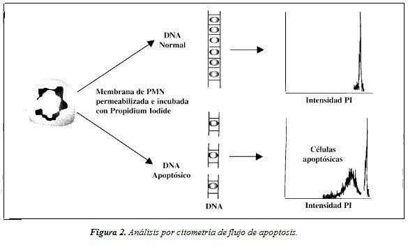 Análisis por Citometría de Flujo de Apoptosis