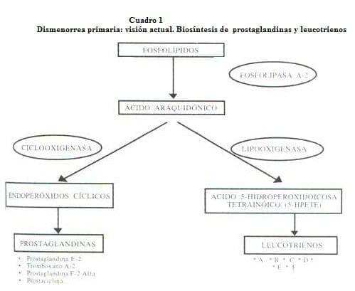 Dismenorrea primaria: Biosíntesis de Prostaglandinas y Leucotrienos