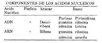 Componentes de los Ácidos Nucleícos