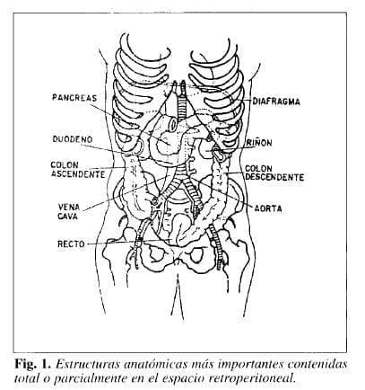 Estructuras anatómicas