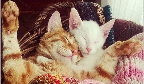 Castración y esterilización en Mascotas