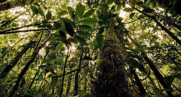 Bosques con el Cambio Climático
