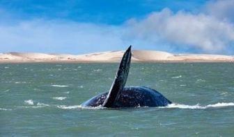 Protección Océanos