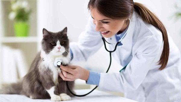 Enfermedades Comunes Perros y Gatos