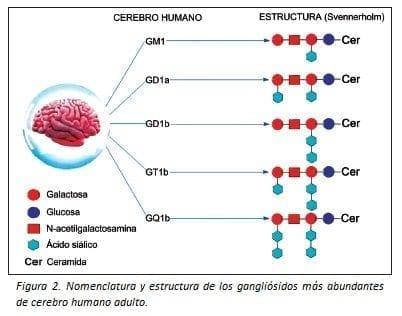 Nomenclatura y estructura de los Gangliósidos