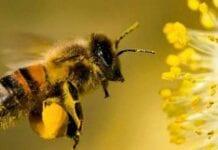 abejas en la agricultura