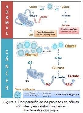 Células Normales y en Células con Cáncer