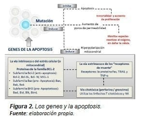 Los Genes y la Apoptosis