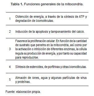 Funciones Generales de la Mitocondria