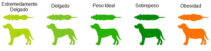 Condición Corporal en Perros