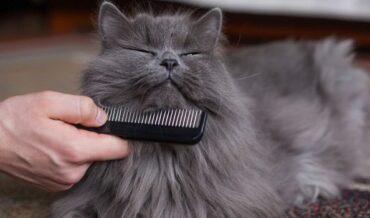 Cuidados básicos para gatos