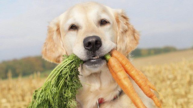 Frutas y Verduras para Mascotas