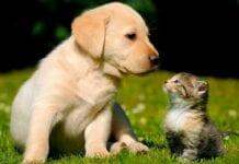 Plan-Basico-Vacunación-Perros-Gatos